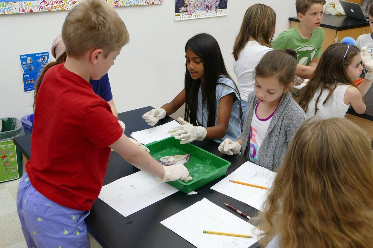 Fourth Graders Dissect Squids
